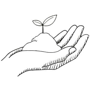 Hände halten Samenkorn