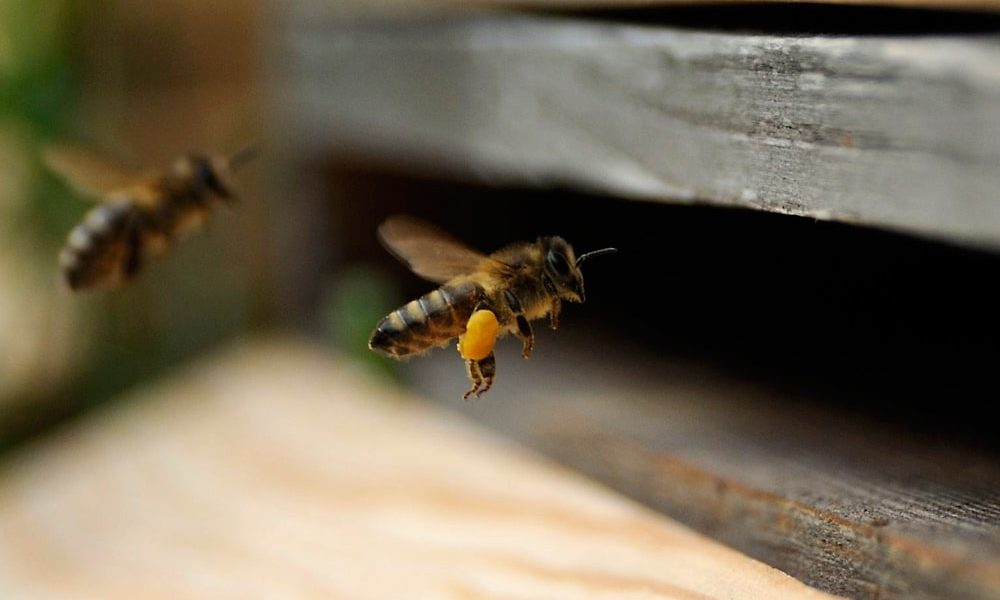 Eine Biene, die in den Bienenstock fliegt